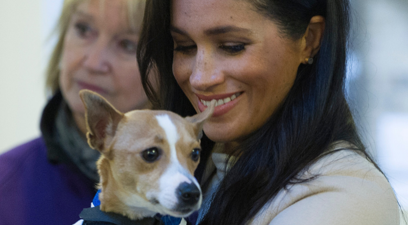 The Most Pampered Celebrity Pets